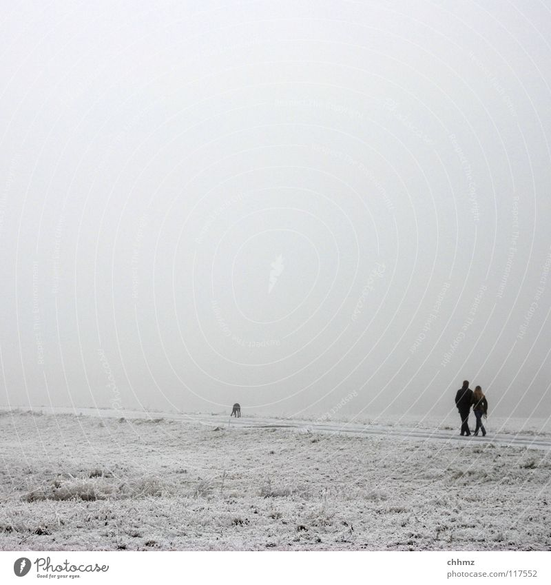 white white Winter White Ice Hoar frost Park Fog Loneliness Tree Horizontal Structures and shapes Flat Cold Unicoloured Dog Diagonal Garden Frost Smoothness
