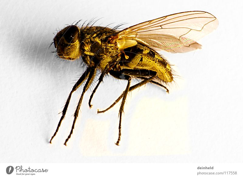 The little one is big Yellow Retroring Animal Macro (Extreme close-up) Close-up Fly Death Wing Flying