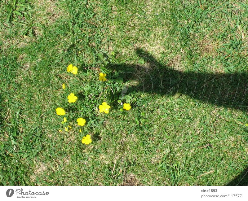 Hand Sun Flower Summer Yellow Meadow Grass Freedom Happy Arm Small Hot Considerable Pasture Shadow play