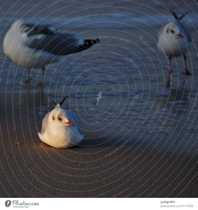 Nature Ocean Winter Beach Vacation & Travel Calm Animal Colour Lake Sand Ice Legs Bird Coast Environment Flying
