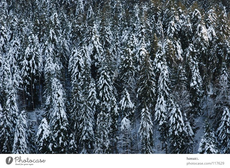 The forest for all the trees Forest Winter Snow Fir tree Timber Firewood Renewable energy Raw materials and fuels Forest death Sustainability sugared coniferous