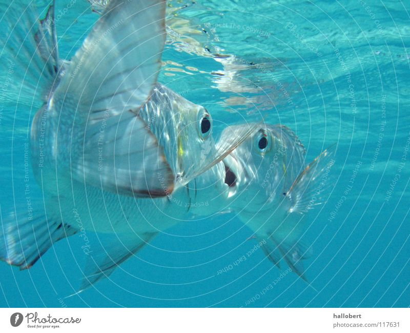 Water Ocean Vacation & Travel Fish Dive Underwater photo Maldives Environmental protection Reef Snorkeling Animal protection