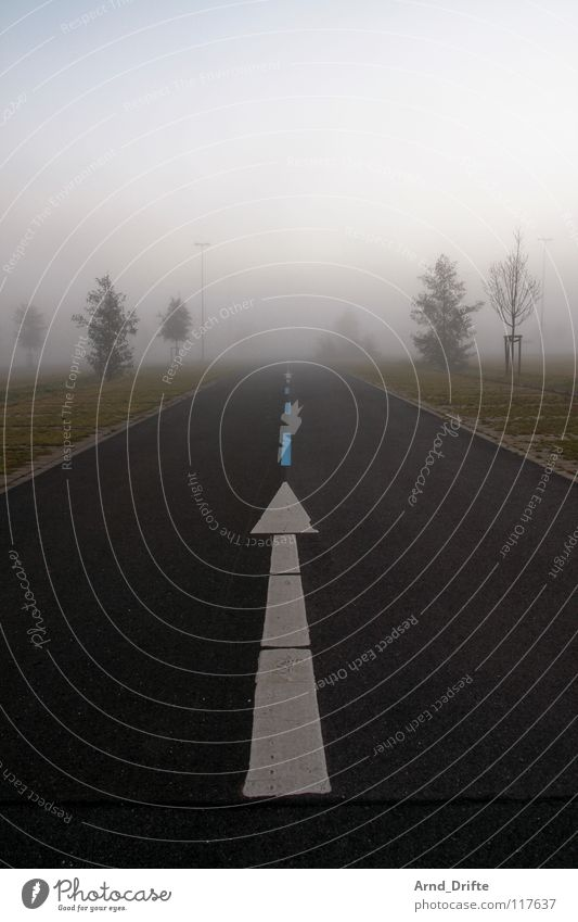 White Tree Street Dark Autumn Meadow Gray Line Brown Fog Signs and labeling Horizon Perspective Asphalt Arrow Middle