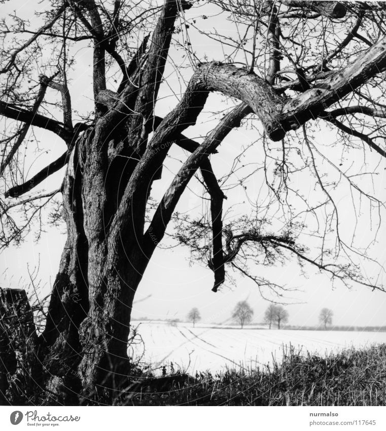 Cold distance II Tree Tree bark Headstrong Winter Field Horizon Leafless Loneliness Vantage point Mecklenburg-Western Pomerania Home country White Gray Classic