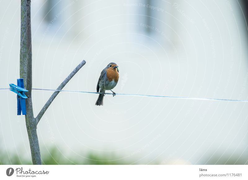 I have... Bird Clothesline Robin redbreast Red Feed Clothes peg Sit