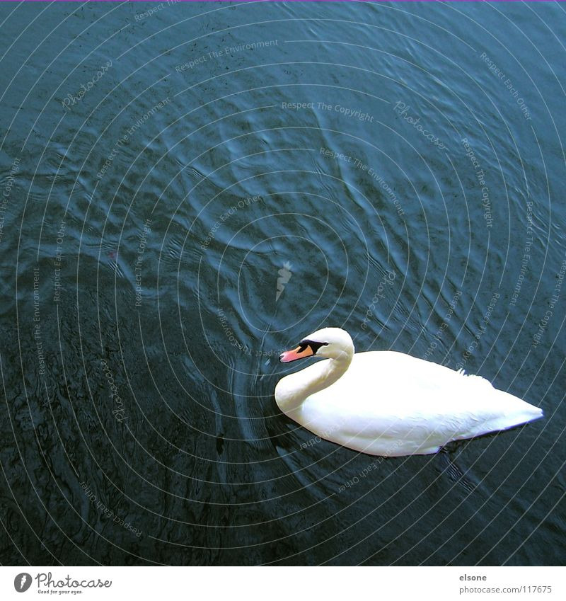 Nature Water White Ocean Animal Lake Bird Waves Elegant Flying Wet River Feather Clean Pure