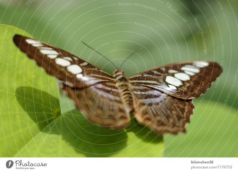 sun worshippers Nature Plant Leaf Animal Wild animal Butterfly Wing Insect Articulate animals Observe Relaxation Flying Sit Wait Exceptional Elegant Exotic