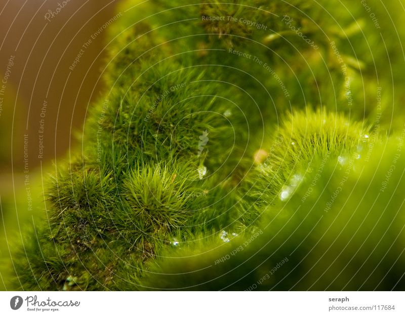 Nature Plant Green Background picture Small Growth Soft Stalk Moss Botany Nest Lichen Lichen Woodground Spore Symbiosis