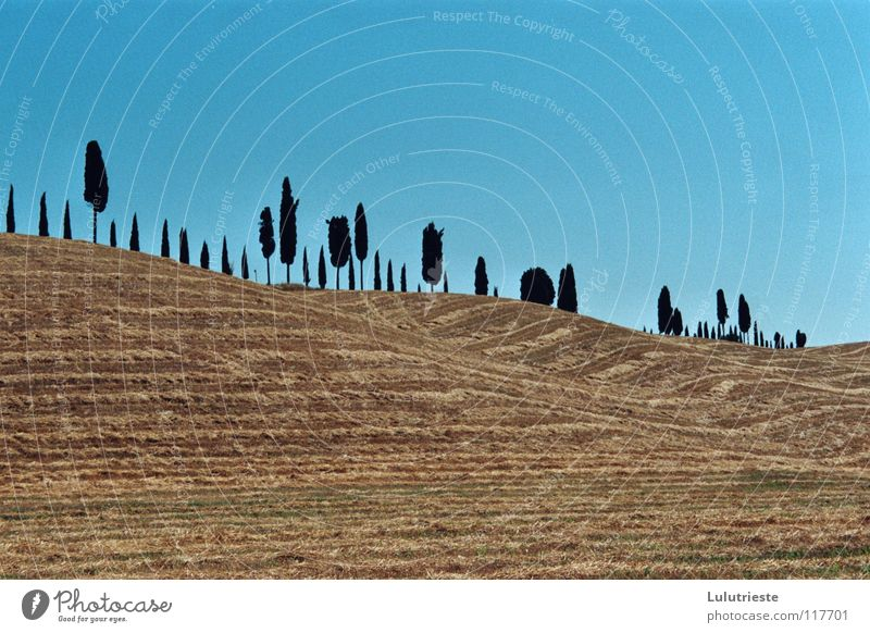 The Tuscany Desert Tree Field Yellow Physics Italy Leisure and hobbies Romance Emotions Seasons Grain Blue Warmth Sky Far-off places Beautiful weather furrow
