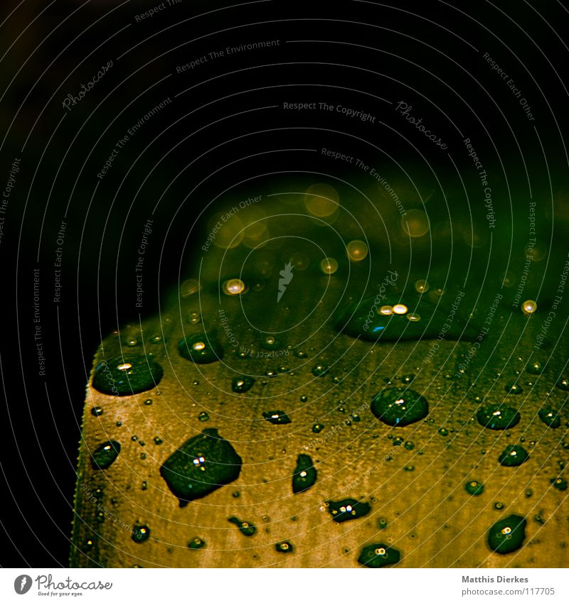 Drops III Water Green Leaf Hydrophobic Esthetic Noble Fantastic Fairy tale Drops of water Tree Bushes Yellow Stand Hover Glide Light Caught by a speed camera