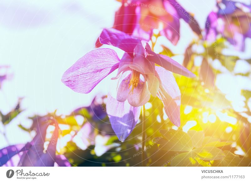 Nature Plant Summer Flower Yellow Spring Dye Blossom Meadow Style Background picture Garden Moody Pink Park Design