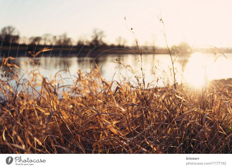 Nature Vacation & Travel Plant Summer Water Sun Landscape Calm Far-off places Environment Yellow Warmth Meadow Grass Lake Brown