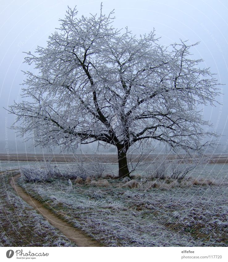 Sky White Tree Green Winter Cold Snow Meadow Grass Wood Lanes & trails Ice Brown Field Earth Frost
