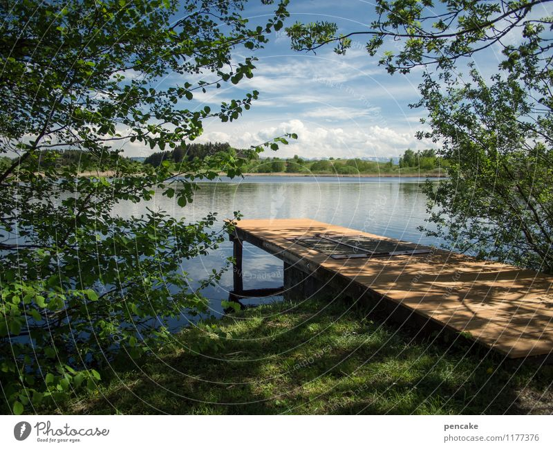 one summer long Nature Landscape Elements Water Sky Summer Beautiful weather Tree Grass Forest Lake Emotions Moody Joie de vivre (Vitality) Leisure and hobbies