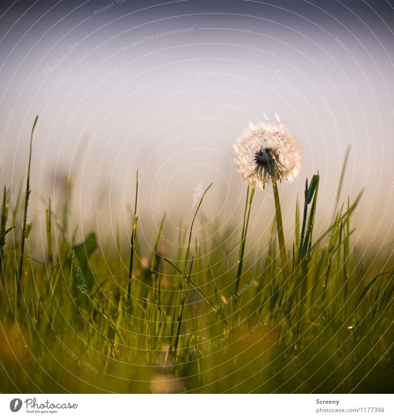 Nature Plant Green Summer Flower Landscape Calm Spring Meadow Grass Small Park Contentment Growth Fresh Beautiful weather