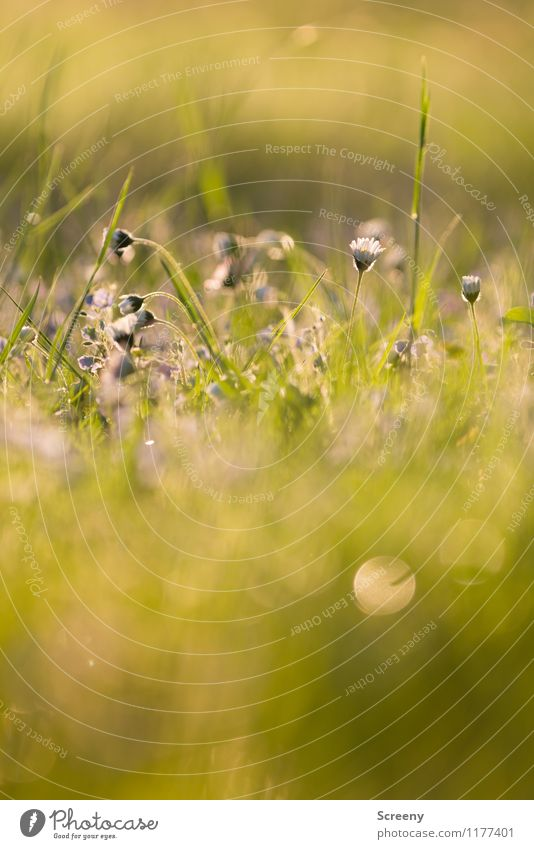 Fairytale | UT Köln Nature Plant Sunlight Spring Summer Beautiful weather Flower Grass Park Meadow Blossoming Growth Fresh Small Warmth Yellow Gold Green Calm