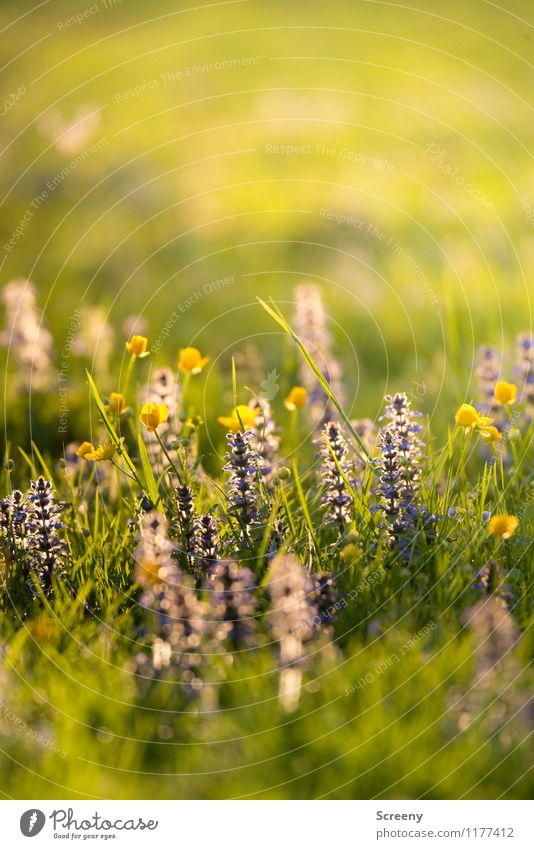 Blossoming | UT Köln Nature Plant Sunlight Spring Summer Beautiful weather Flower Grass Park Meadow Growth Fresh Small Warmth Calm Fragrance Environment