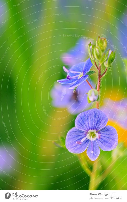 Nature Blue Plant Green Summer Flower Environment Yellow Spring Meadow Park Blossoming Beautiful weather Foliage plant Wild plant Bird's eye