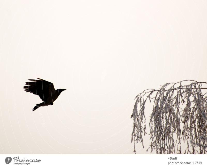 Sky Nature Tree Winter Leaf Black Animal Dark Freedom Gray Dream Air Bird Fog Flying Free