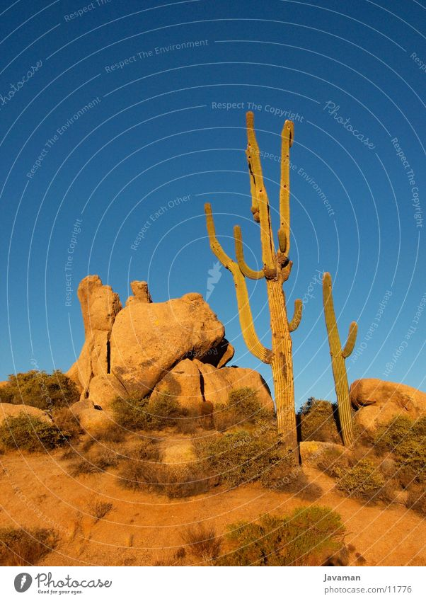 Phoenix Desert Americas Cactus Sonora Desert Blue sky Cloudless sky Clear sky Isolated Image Rock formation Deserted Stone block