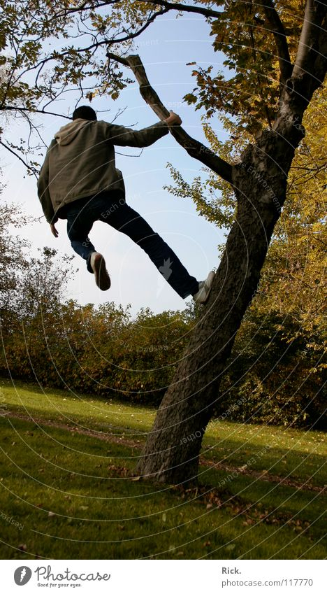 Climbing tree no. 2. Tree Jump Autumn Yellow Fellow Meadow Hold Situation Action Leaf Tree bark Moody Footwear Wood flour Sky Green Crazy Tripod Life Man Deep