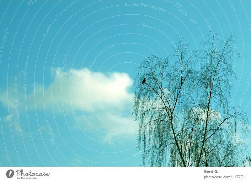 Sky Tree Bird Branch Delicate Heavenly Branchage Sky blue
