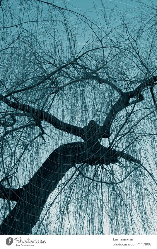 Sky Tree Winter Dark Cold Life Sadness Dream Power Wild animal Fantastic Idea Branch Threat Mysterious Grief
