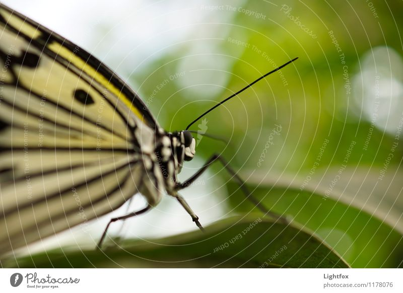butterflies Animal Butterfly 1 Emotions Moody Zoom effect Detail Nature Point Leaf Feeler Eyes Compound eye Colour photo Exterior shot Central perspective