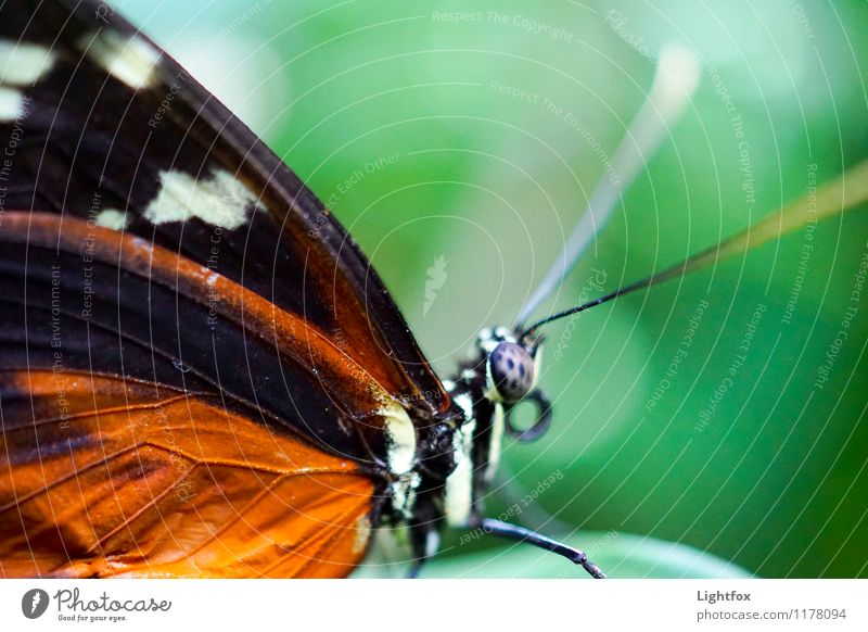 ...and it made Zoom Animal Butterfly 1 Magnifying glass Microscope Green Orange Black White Wing Scales Ready to start Zoom effect Compound eye rest Fly
