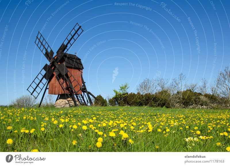 Old windmill and blossom dandelions Vacation & Travel Tourism Nature Landscape Sky Flower Grass Hill Architecture Historic Retro Blue Yellow Green Red Colour