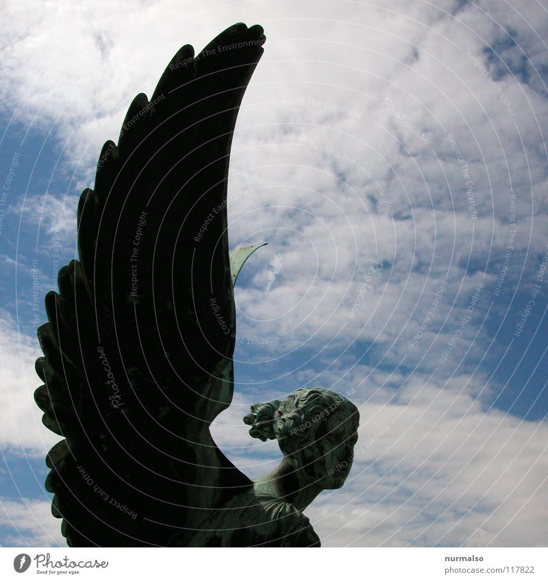 Sky Old Beautiful Clouds Emotions Head Stone Religion and faith Park Earth Wing Angel Feather Manmade structures Film industry Creepy