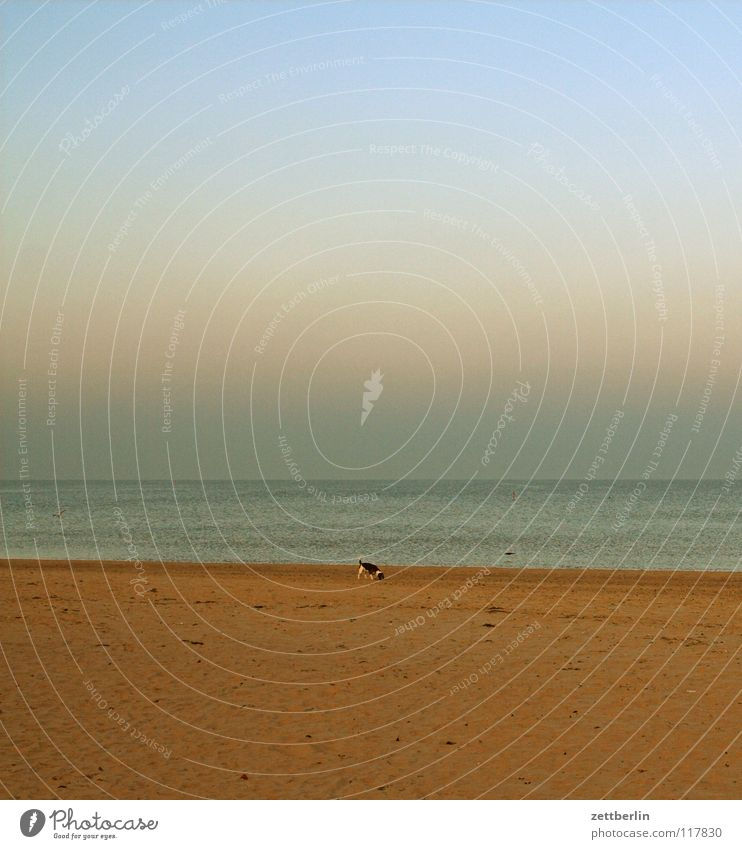 Water Sky Ocean Winter Beach Vacation & Travel Far-off places Dream Dog Lake Sand Coast Horizon Empty Perspective Target