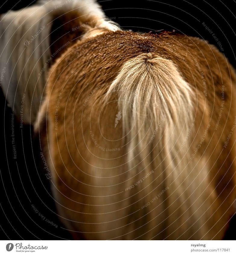 pony farm Horse Pelt Tails Mane Brown Black Dark Mammal Hind quarters ponny Bright