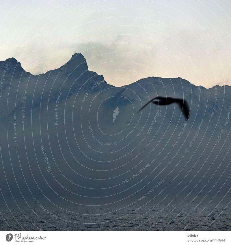 Sky Water Loneliness Winter Dark Mountain Cold Life Gray Lake Stone Bird Earth Rock Weather Fog