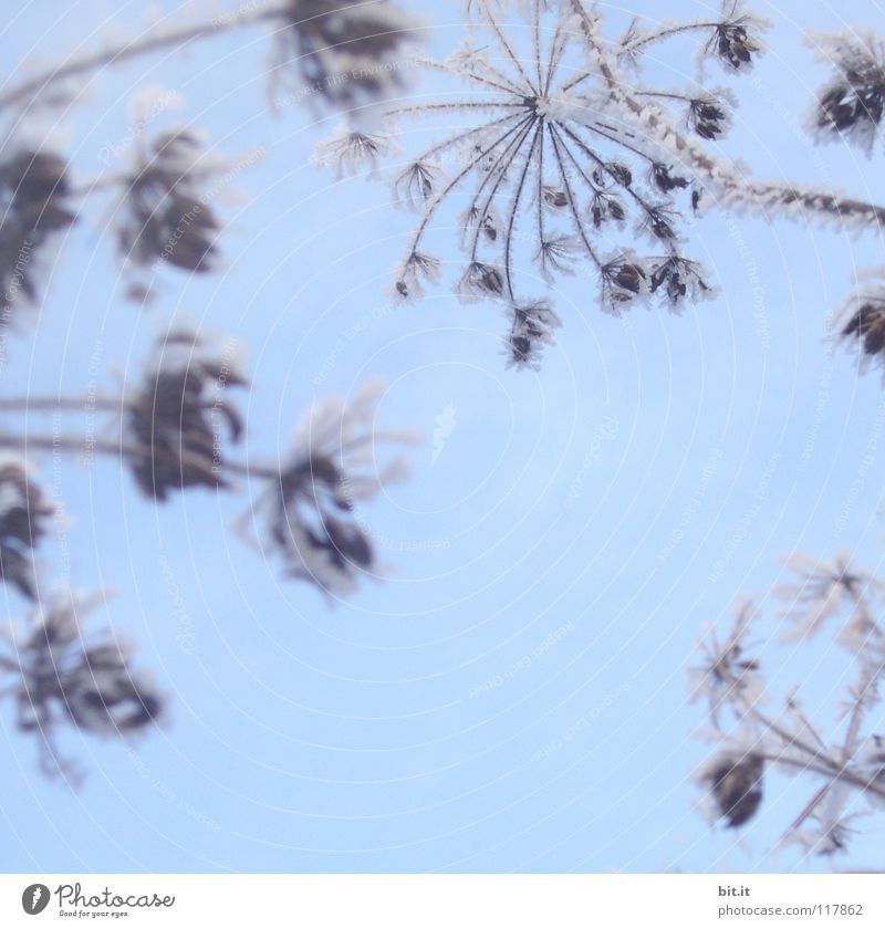 Beautiful Sky Flower Blue Winter Cold Snow Dream Ice Star (Symbol) Frost Fantastic Delicate Frozen Surrealism Abstract