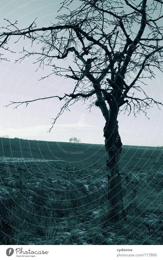 temporise Winter Cold Loneliness Calm Field Frozen Moody Longing Phenomenon Tree Motionless Dark Comfortless Horizon Individual Silhouette Black Emotions Snow