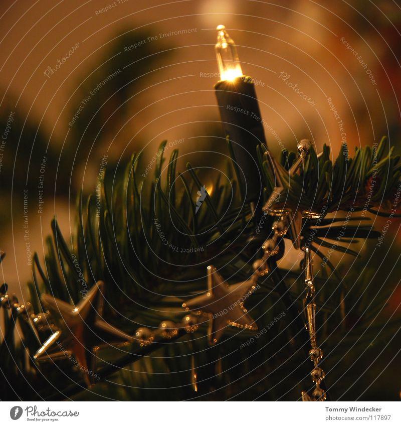 Christmas & Advent Joy Winter Lighting Feasts & Celebrations Glittering Decoration Sweet Star (Symbol) Candle Peace Surprise Christmas tree Sphere Jewellery