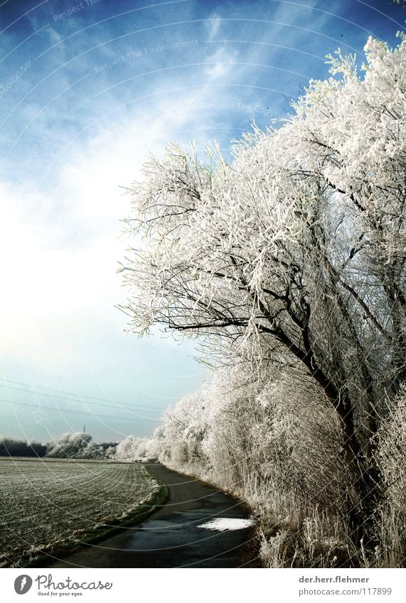Sky Tree Clouds Cold Snow Lanes & trails Ice Field Fog Concrete Bushes Asphalt Frozen Hoar frost Speyer