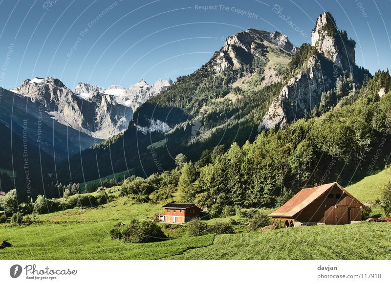 postcard idyll Switzerland Massive Tree Meadow Grass Canton Uri Vacation & Travel Summer Air Well-being Agriculture Mountain Rock Snow Isenthal Beautiful