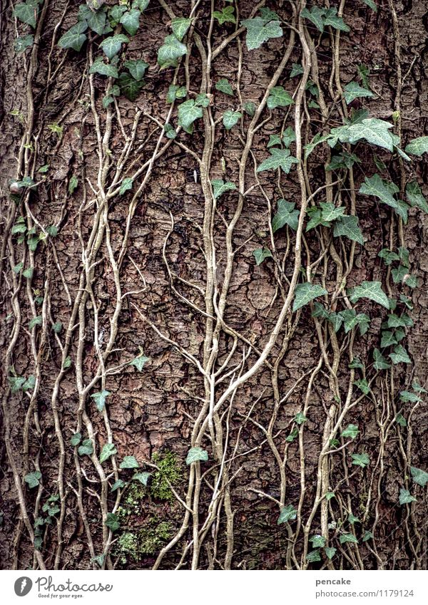 Twisted Paths Nature Elements Spring Plant Tree Forest Sign Success Green Couple Contact Life Attachment Ivy Tree bark Tree trunk To hold on Tendril