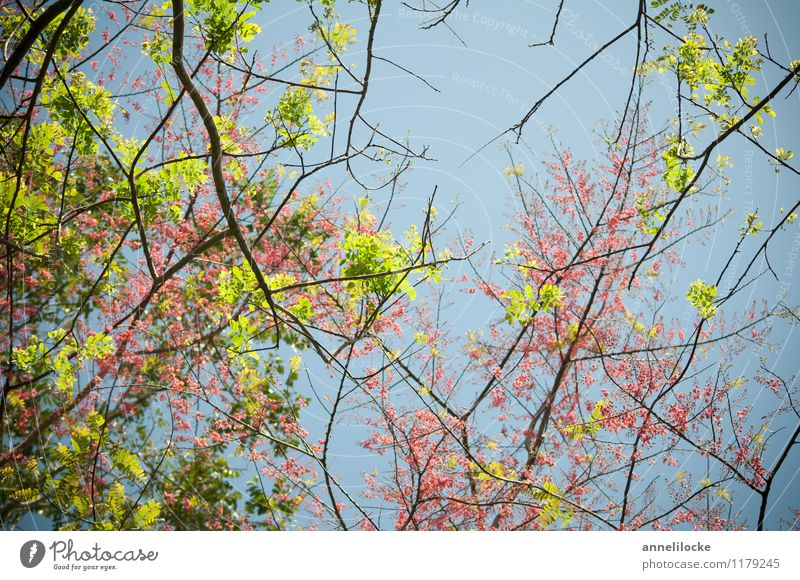 Nature Blue Plant Green Tree Leaf Forest Environment Spring Blossom Pink Growth Blossoming Beautiful weather Bud Exotic