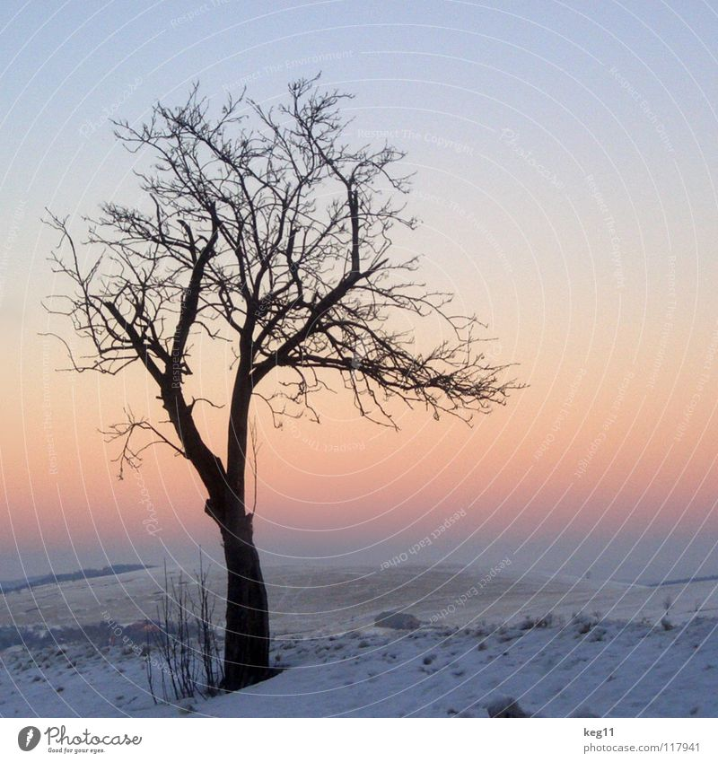 Sky Beautiful White Sun Tree Joy Winter Cold Graffiti Snow Moody Pink Field Branch Romance Target