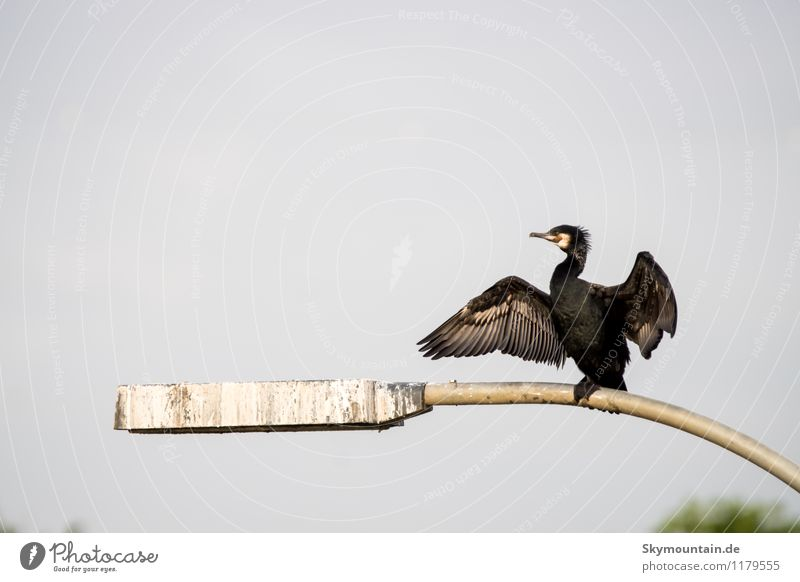 cormorant Environment Nature Landscape Animal Lakeside River bank Neckar valley Wild animal Bird Animal face Wing Cormorant 1 Observe Relaxation Crouch Sit