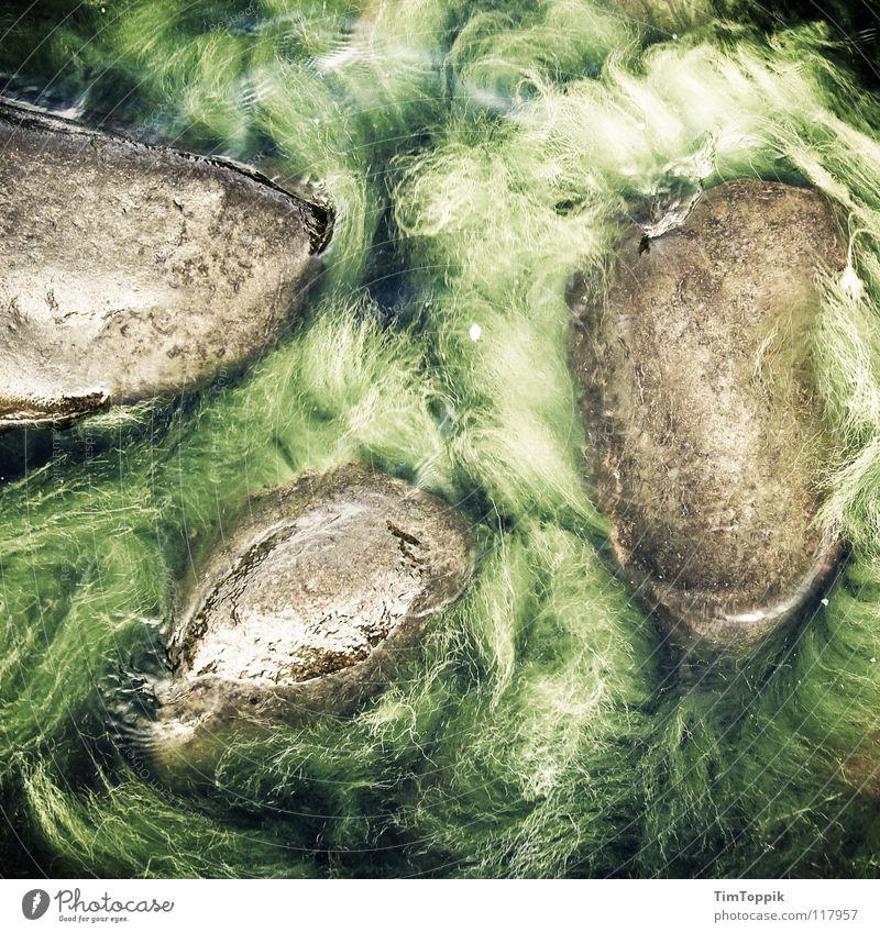 Nature Water Green Ocean Beach Coast Stone Lake Wet Mysterious North Sea Baltic Sea Virgin forest Mystic Brazil Algae