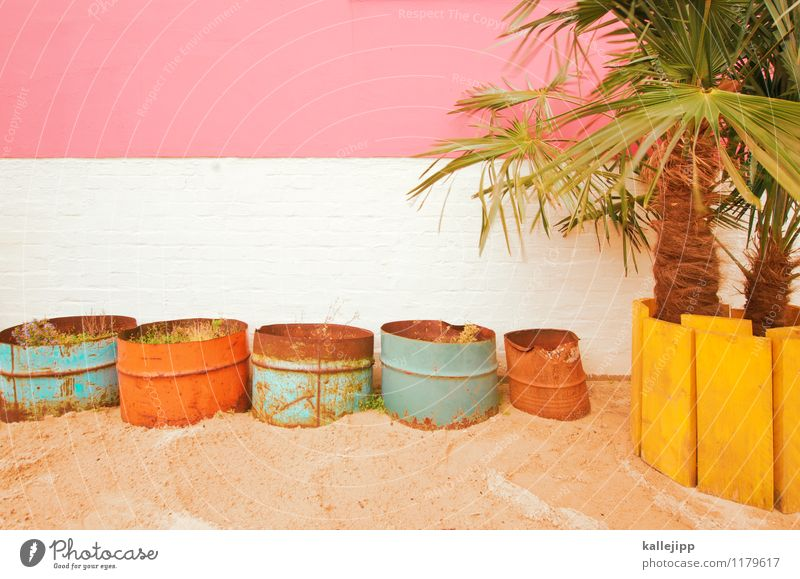 White Joy Yellow Style Lifestyle Pink Facade Orange Leisure and hobbies Hip & trendy Turquoise Exotic Palm tree Sandy beach Pot Foliage plant