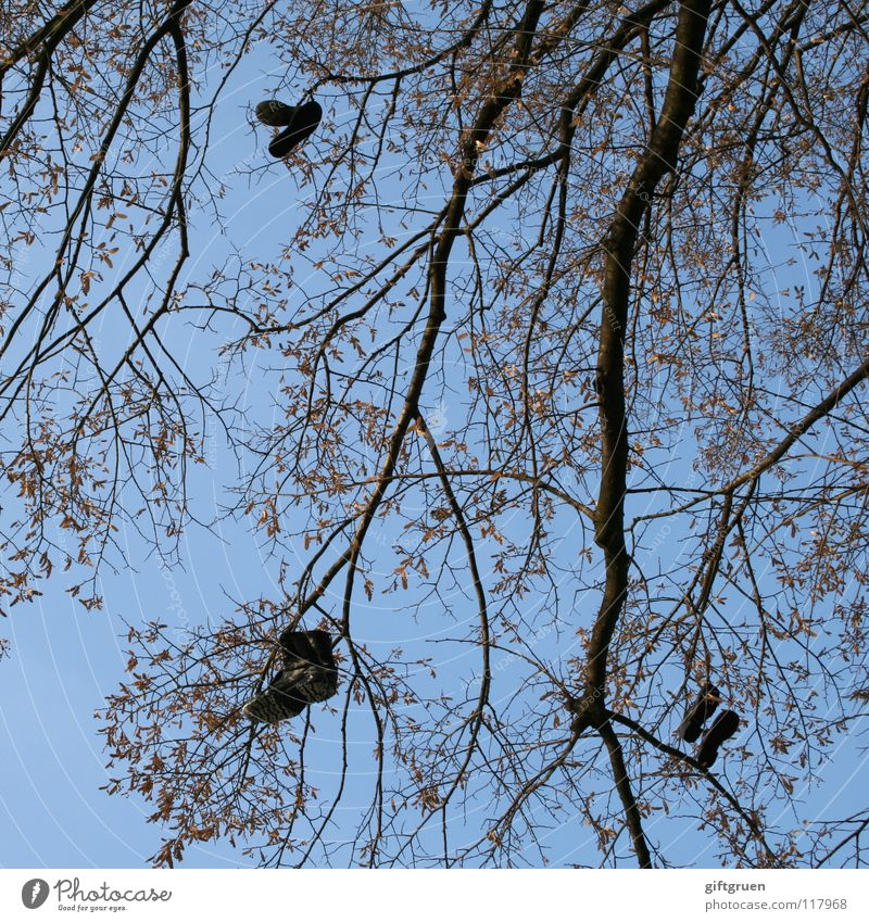 boot tree Tree Footwear Boots Dangle Hang Leaf Black Sky Clothing Branch with both legs on the ground feet on the ground Throw Blue