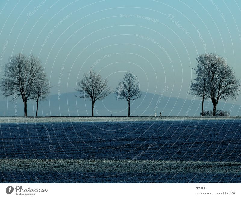 blue Degersen Calm Winter Snow Sky Clouds Bad weather Tree Field Cold Blue Loneliness Country road Hoar frost Lower Saxony Boundary marking Home country Pensive