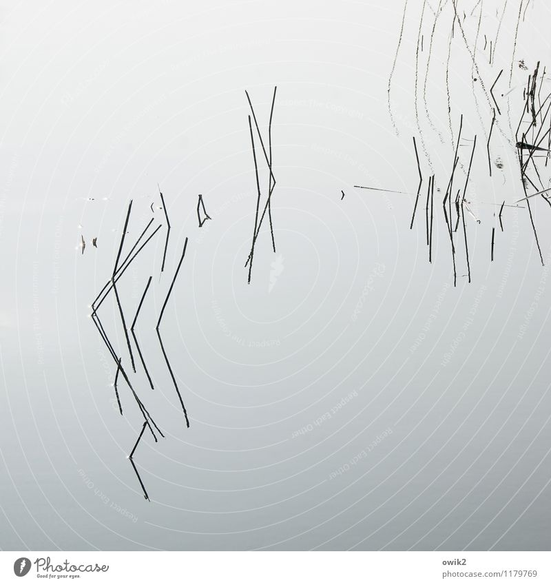 still wind Plant Aquatic plant Lake Thin Authentic Simple Near Surface of water Blade of grass Calm Line Minimalistic Few Sparse Puzzle Graphic Concentrate