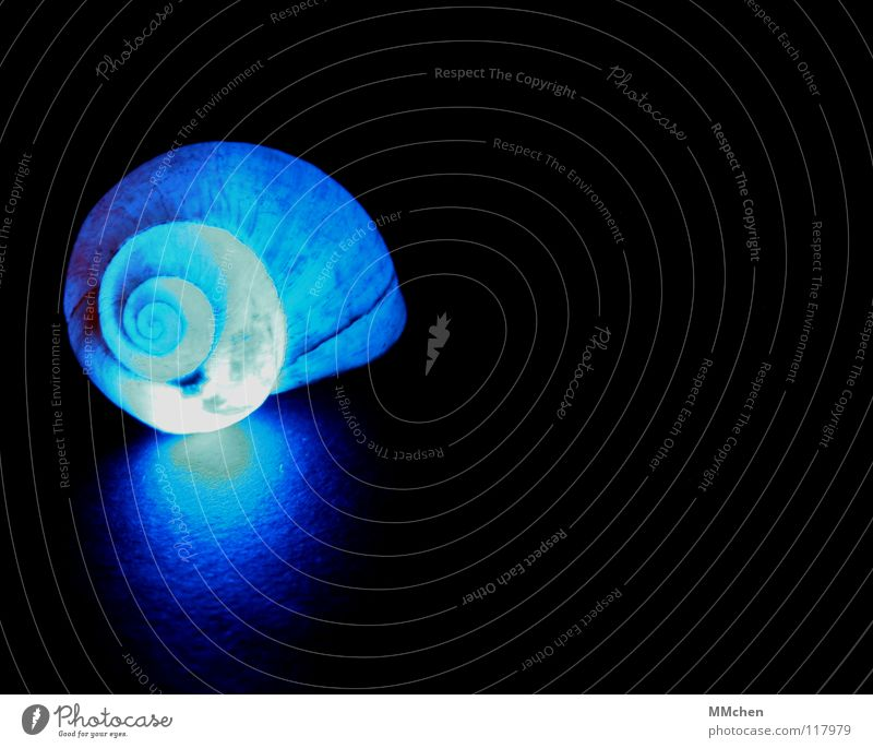 Nature Blue Beautiful Animal Dark Lighting Illuminate Circle Point Soft Protection Moving (to change residence) Spiral Snail Hard Character