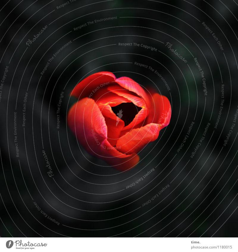 Nature Plant Beautiful Flower Loneliness Leaf Eroticism Dark Sadness Spring Blossom Natural Time Garden Moody Elegant